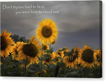 Sunflowers Canvas Print - Stand Out by Bill Wakeley