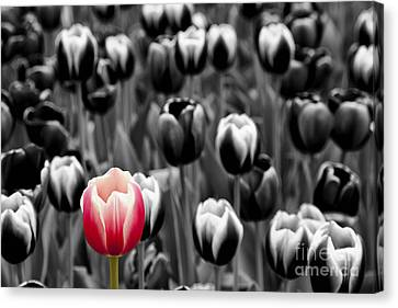 Stand Out From The Crowd... Canvas Print