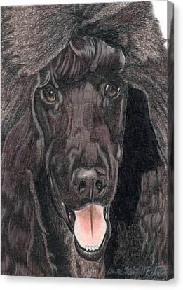 Standard Poodle Vignette Canvas Print by Anita Putman