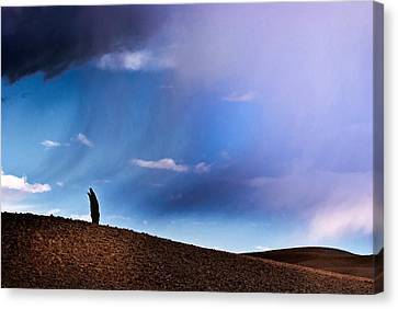 Standing Against The Wind Canvas Print by Yuri Santin
