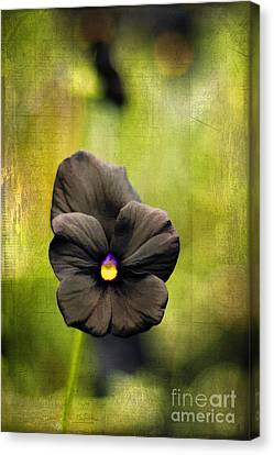 Standing Alone Canvas Print by Darren Fisher