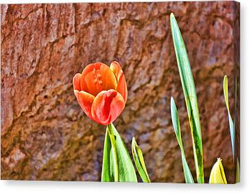 Standing Alone  Canvas Print by Jeanne May