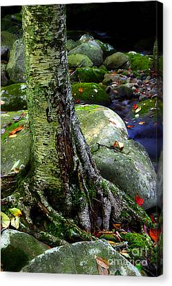Standing Along The Stream Canvas Print by Michael Eingle