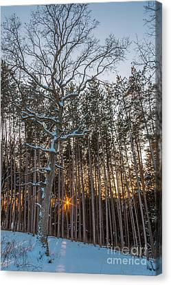 Standing Among The Many Canvas Print by Andrew Slater