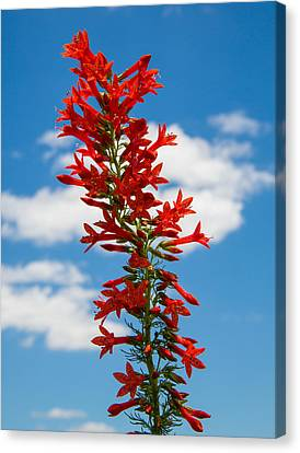 Standing Cypress With Clouds Canvas Print