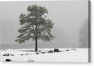 Canvas Print featuring the photograph Standing In A Snow Storm by Brenda Bostic