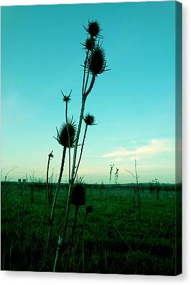 Standing Canvas Print by Lucy D
