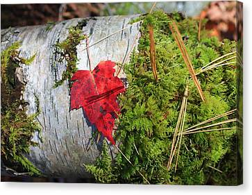 Canvas Print featuring the photograph Standing Out by Alicia Knust