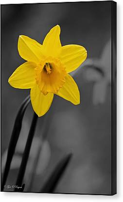 Standing Out Canvas Print