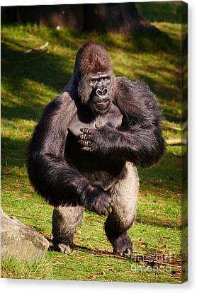 Standing Silverback Gorilla Canvas Print