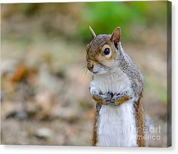 Standing Squirrel Canvas Print by Matt Malloy