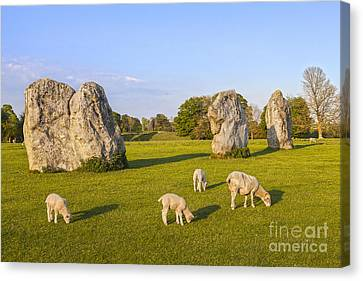 Standing Stones And Sheep Avebury Canvas Print by Colin and Linda McKie