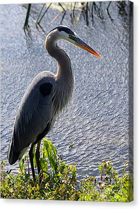 Birds Canvas Print - Standing Tall by April Antonia