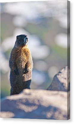 Standing Tall In Colorado Canvas Print by Mike Berenson