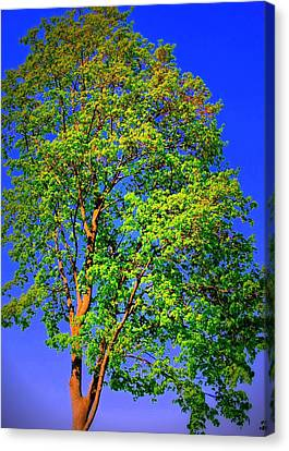 Standing Tall Canvas Print by Mary Beth Landis