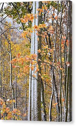 Standing Tall Canvas Print by Susan Leggett