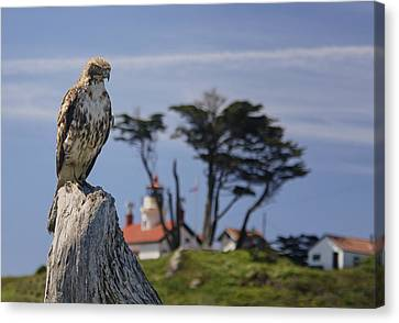 Canvas Print featuring the photograph Standing Watch by Betty Depee