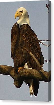 Standing Watch Canvas Print by Bruce Bley