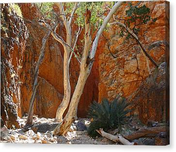 Standley Chasm Canvas Print by Evelyn Tambour