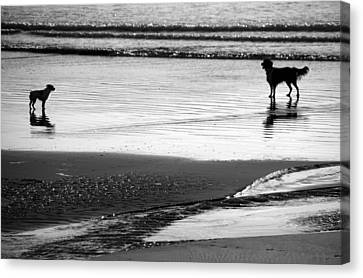 Standoff At The Beach Canvas Print