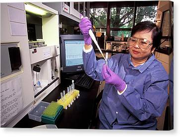 Staphylococcus Toxins Research Canvas Print by Stephen Ausmus/us Department Of Agriculture