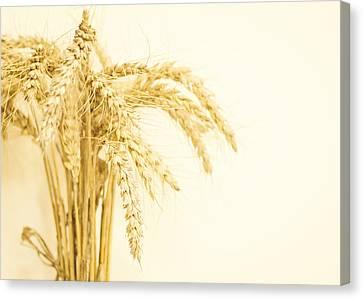Staple Crop Canvas Print by Heather Applegate