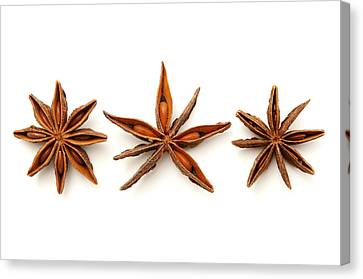Star Anise Fruits Canvas Print