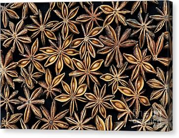 Star Anise Pattern Canvas Print by Tim Gainey