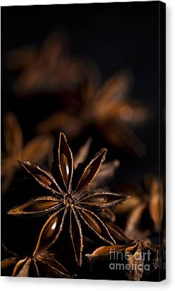 Star Anise Study Canvas Print by Anne Gilbert