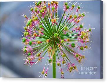 Canvas Print featuring the photograph Star Burst by John S