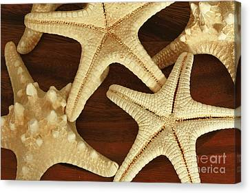 Star Fish Canvas Print by Inspired Nature Photography Fine Art Photography