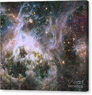 Star Formation In The Tarantula Nebula Canvas Print by Stocktrek Images