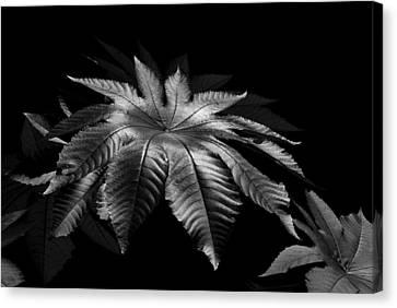 Star Leaf Canvas Print