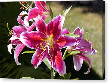 Star Lily In Blazing Color Canvas Print by Susan Crossman Buscho