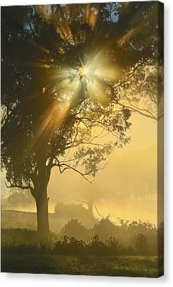 Star-shine Canvas Print