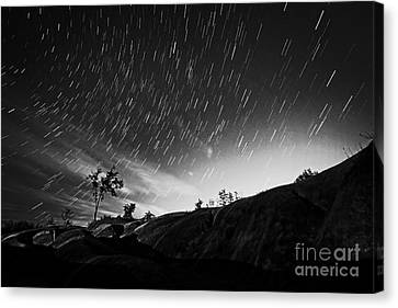 Startrails Canvas Print - Star Trails And Trees Mono by Charline Xia