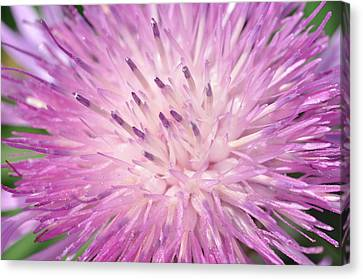 Canvas Print featuring the photograph Starburst by Sabine Edrissi