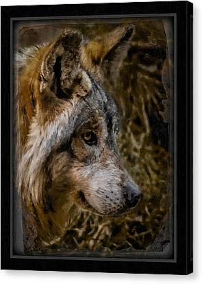 Stare Of The Wolf Canvas Print by Ernie Echols