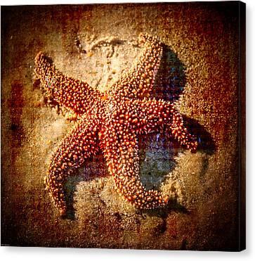 Starfish 3 Canvas Print by Kathleen Scanlan