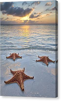Canvas Print featuring the photograph Starfish Beach Sunset by Adam Romanowicz