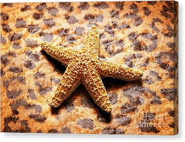 Starfish Enterprise Canvas Print by Andee Design