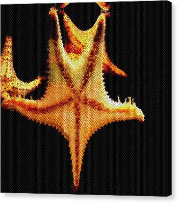 Canvas Print featuring the photograph Starfish In Mosaic by Janette Boyd
