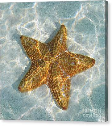 Starfish Canvas Print by Jon Neidert