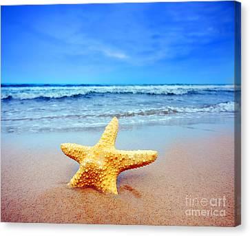 Starfish Canvas Print - Starfish On A Beach   by Michal Bednarek