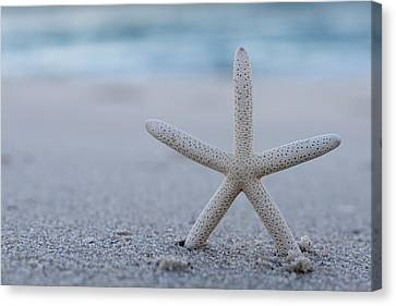 Starfish On Beach Seaside New Jersey Canvas Print by Terry DeLuco