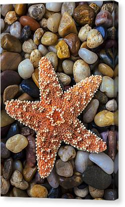 Starfish On Rocks Canvas Print by Garry Gay