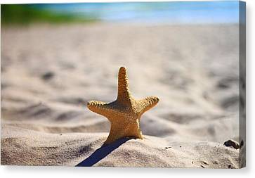 Sun Tan Canvas Print - Starfish On The Beach by Dan Sproul