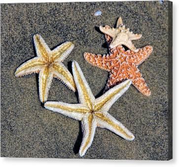 Starfish Canvas Print by Tammy Espino