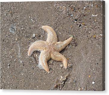 Canvas Print featuring the photograph Starfish by Tiffany Erdman