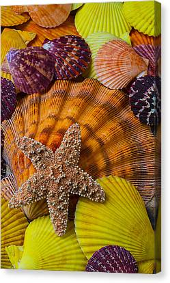 Starfish With Seashells Canvas Print by Garry Gay